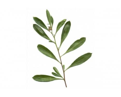 Griffonia Simplicifolia Extrait 20 % de 5 HTP